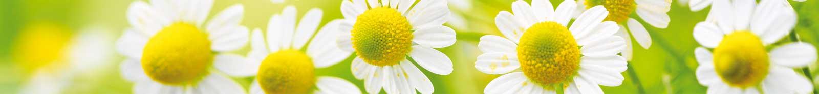 Fortbildung und Weiterbildung in Homöopathie und Naturheilkunde